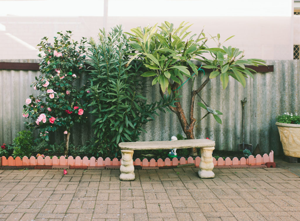 bench seat and camellias
